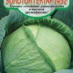 Сорт капусты Золотой гектар 1432