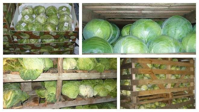 Коллаж: хранение капусты