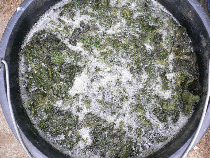 Процесс брожения удобрения из крапивы