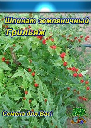 Семена шпината Грильяж