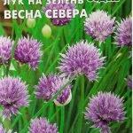 Сорт шнитт-лука Весна Севера