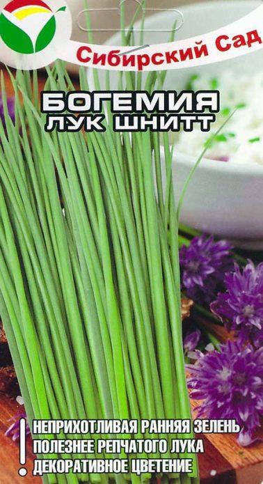 Сорт шнитт-лука Богемия