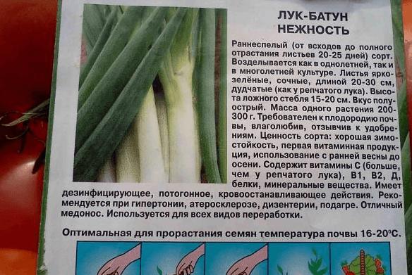 Семена лука-батуна Нежность