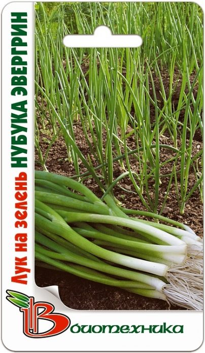 Семена лука-батуна Нубука Эвергрин