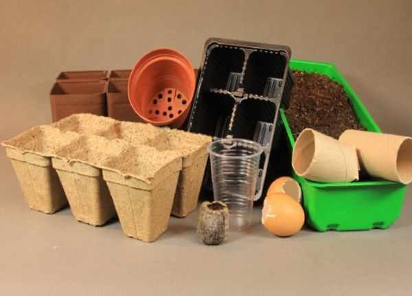Подходящие ёмкости для выращивания рассады пекинской капусты