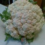 Гибрид цветной капусты Фремонт