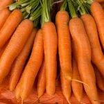Морковь сорт Хрустяшка