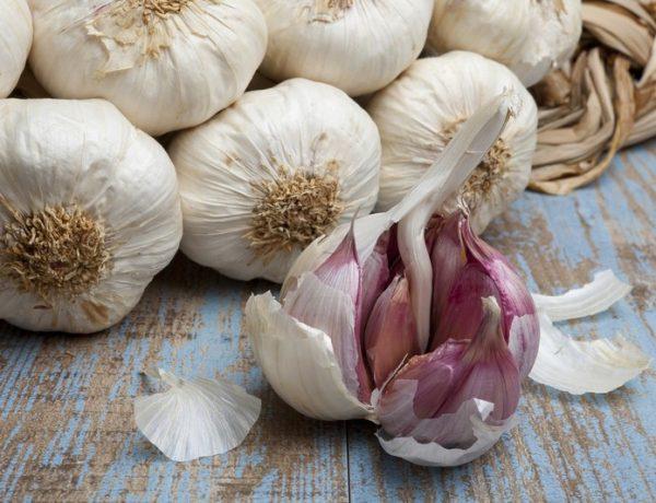 Яровой чеснок: выращивание и уход, причины плохого роста
