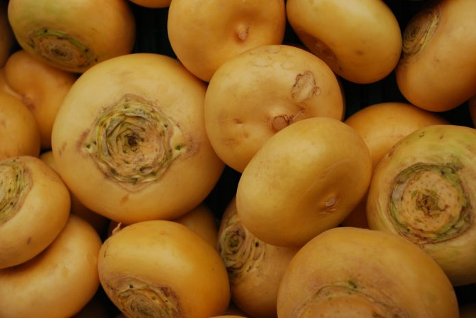 Плоды репы сорта Петровская