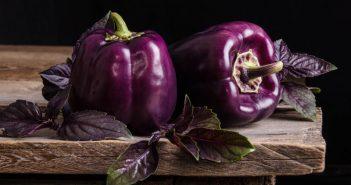 Черноплодный болгарский перец