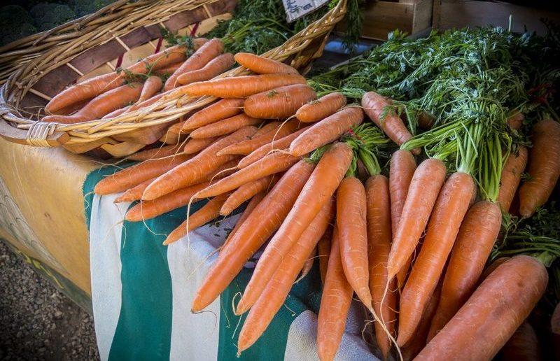 Урожайная морковь