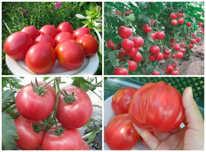 Разные сорта розовых помидоров