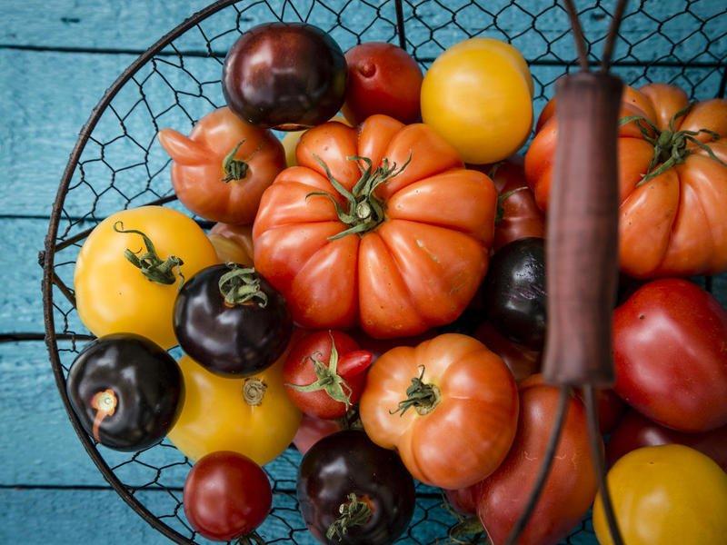 Скороспелые сорта томатов для теплиц: названия, описание с фото, характеристики и плодоносность