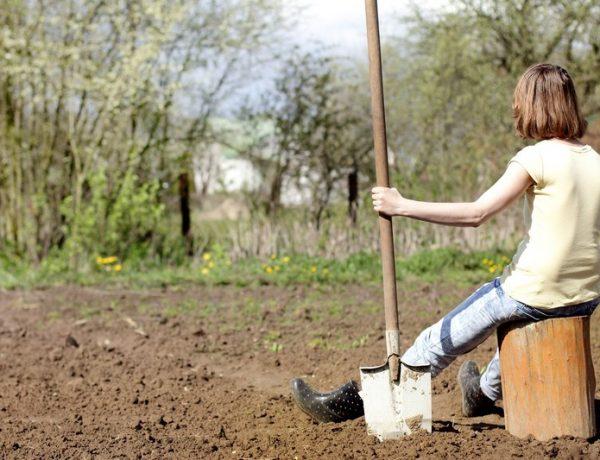 Время копать огород: какая лопата лучше?