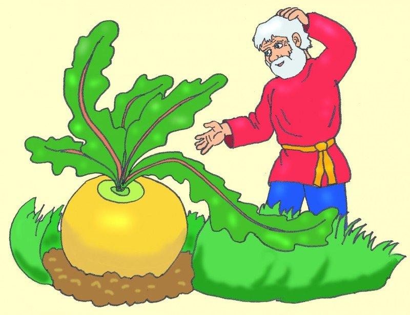 Выращивание и уход за репой в открытом грунте, правила и схема посадки