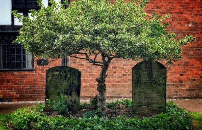 дерево над могилами