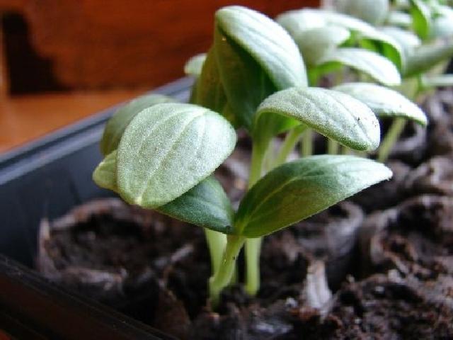 Сеянцы не растут
