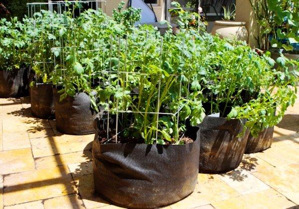 Картофель в мешках выращивание