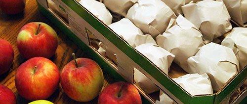 Хранение яблок Лигол