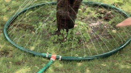 Капельный полив яблони