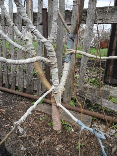 Зимнее укрытие для яблони