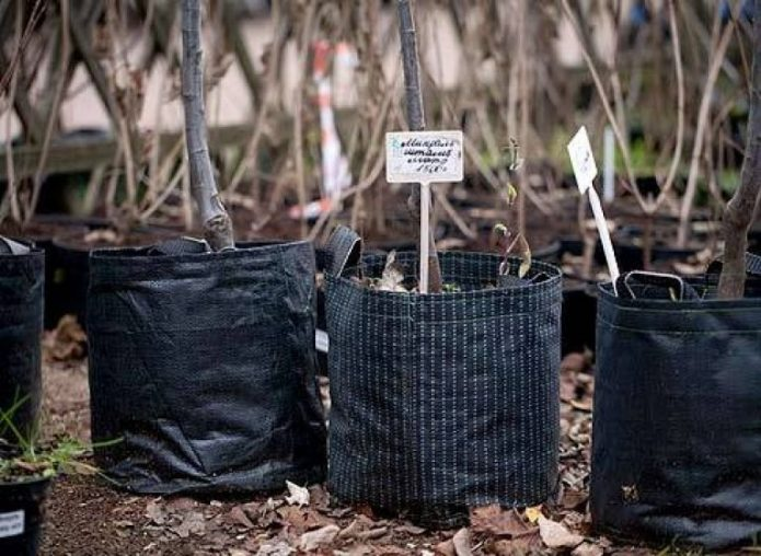 Правильная упаковка саженцев фруктовых деревьев