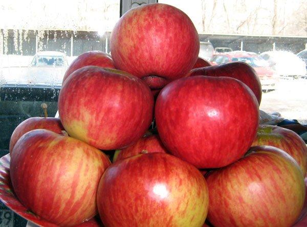 Яблоки сорта Апорт Александра