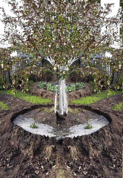 Полив яблони по бороздкам