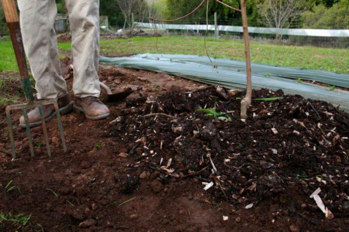 Органическое удобрение под саженцем