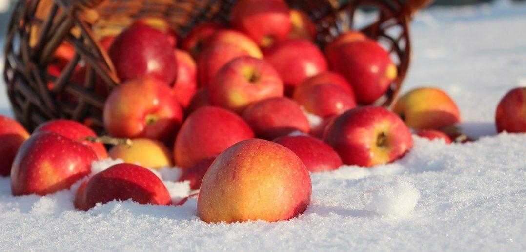 яблоки в снегу
