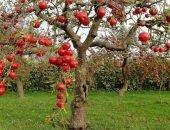 Лучшие сорта карликовых яблонь для сада