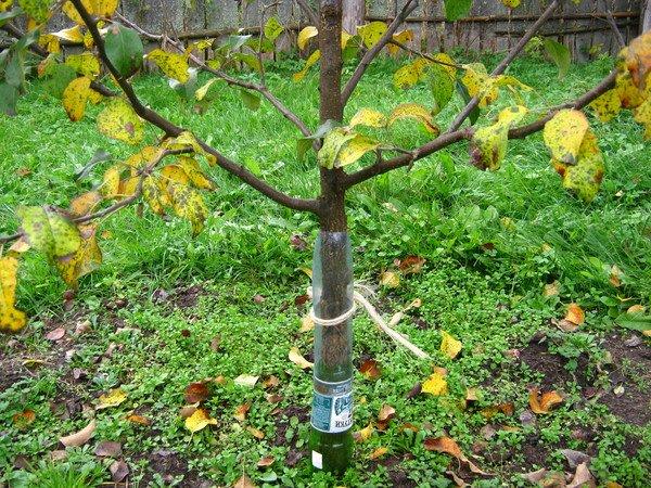 Пластиковые бутылки для защиты дерева
