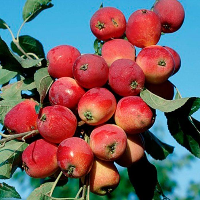 Колонновидная яблоня Китайка красная