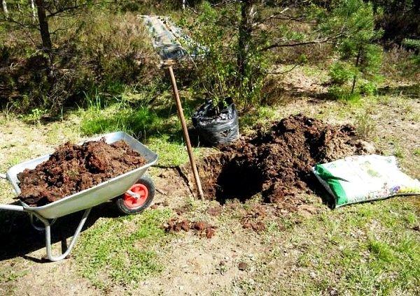 Подготовка участка к посадке яблони