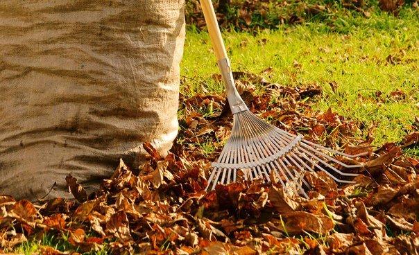 осенняя уборка листьев