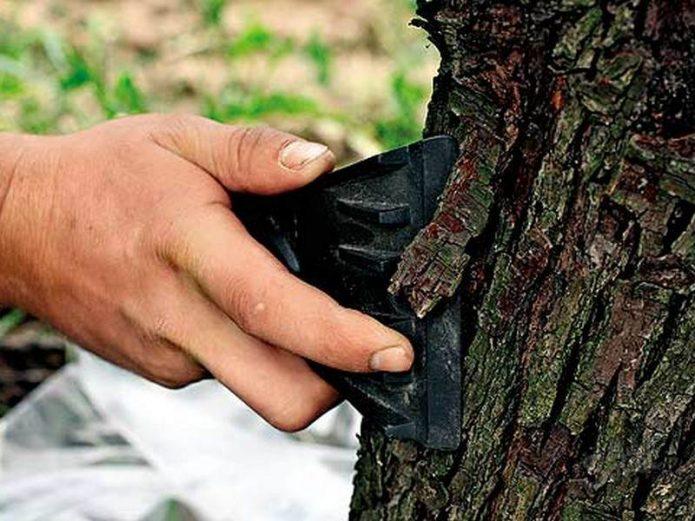 очищение отмёршей коры со ствола