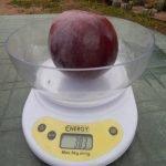 Яблоко сорта Дарунок