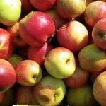 Яблоки сорта Память Сюбаровой