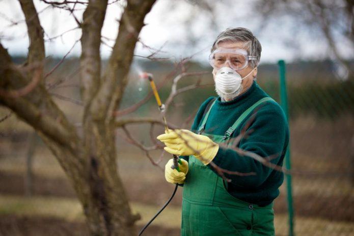 Садовод опрыскивает яблоню