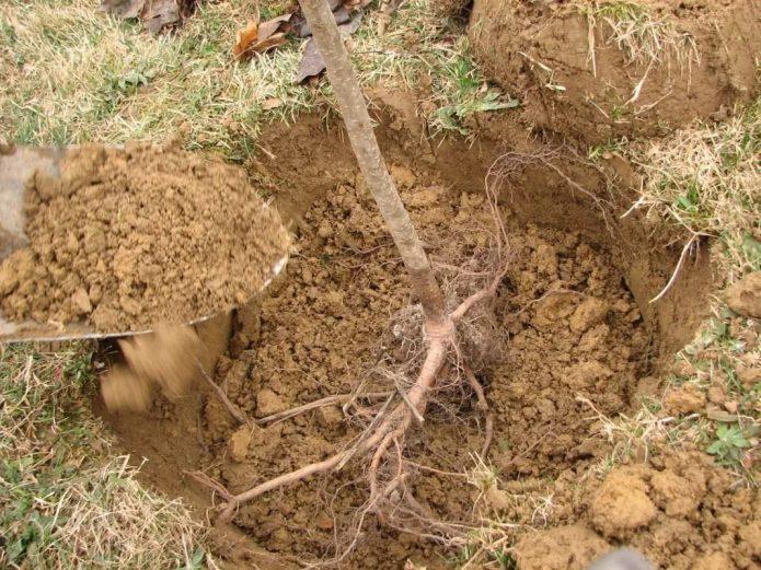 Наполнение ямы грунтом