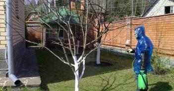 обработка яблони от вредителей