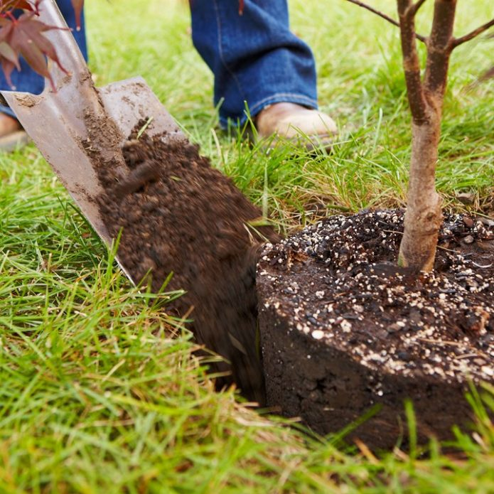 Обкапывание дерева