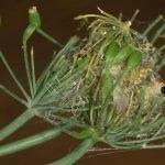 Паутинное гнездо