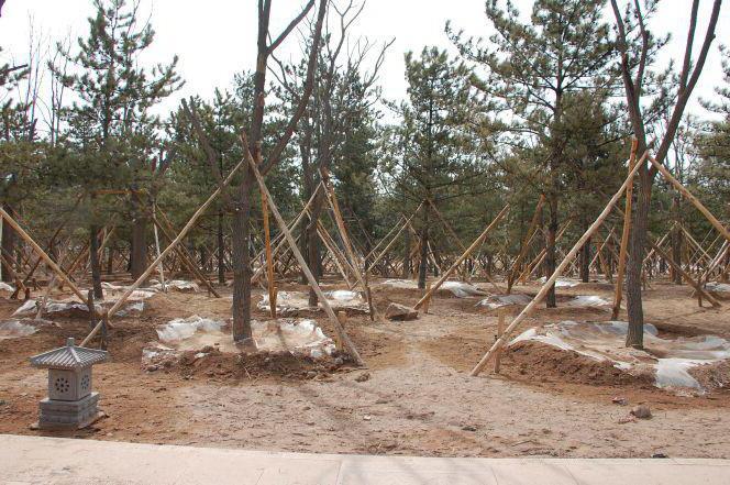 Опоры для пересаженных деревьев