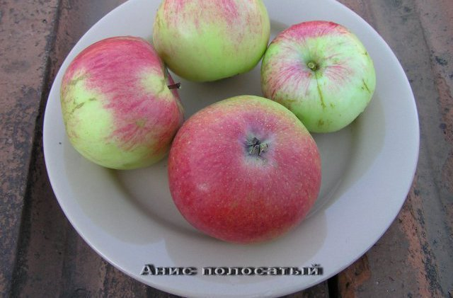 Яблоки сорта Анис Серый