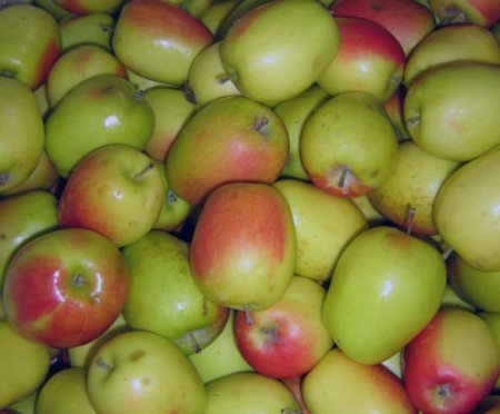Яблоки сорта Изумительное