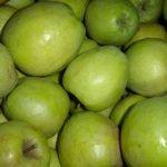Яблоки сорта Белорусский Синап