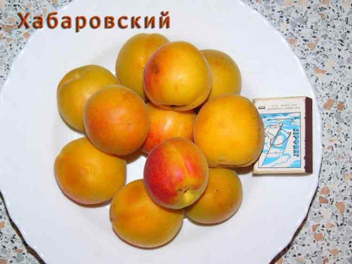 Абрикос сорта Хабаровский