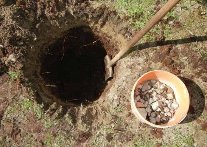 Лопата в посадочной яме и ведро с дренажем