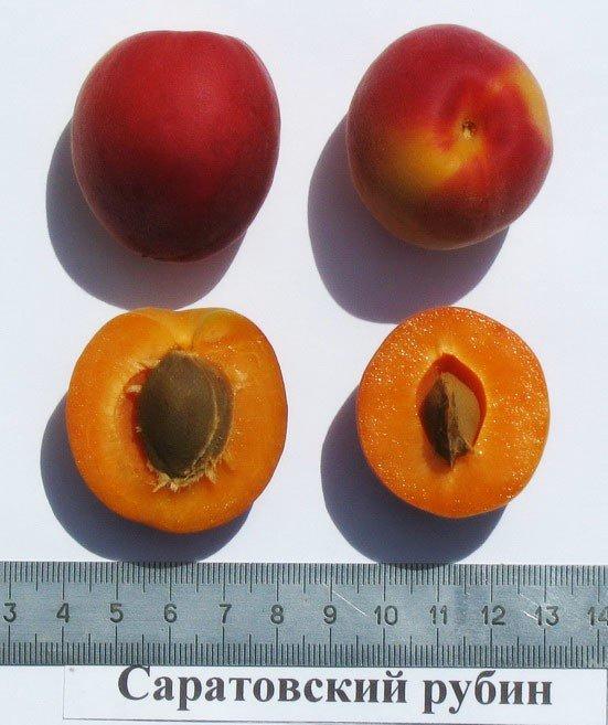 Плод Саратовского рубина в разрезе